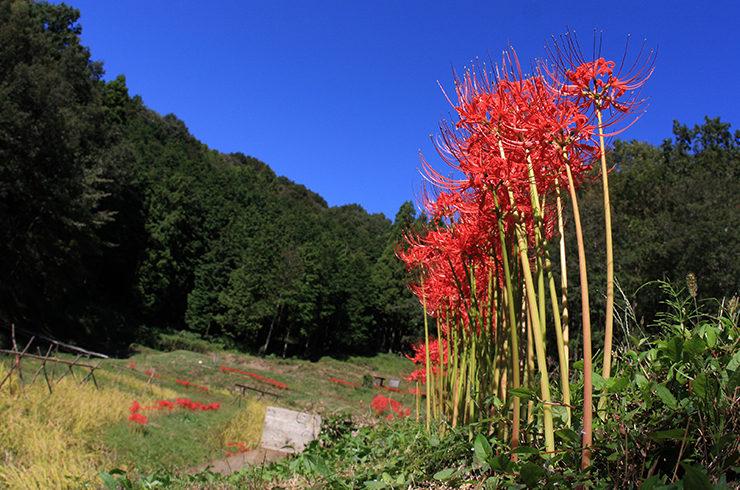 野遊び里山デイキャンプ | 栃木県