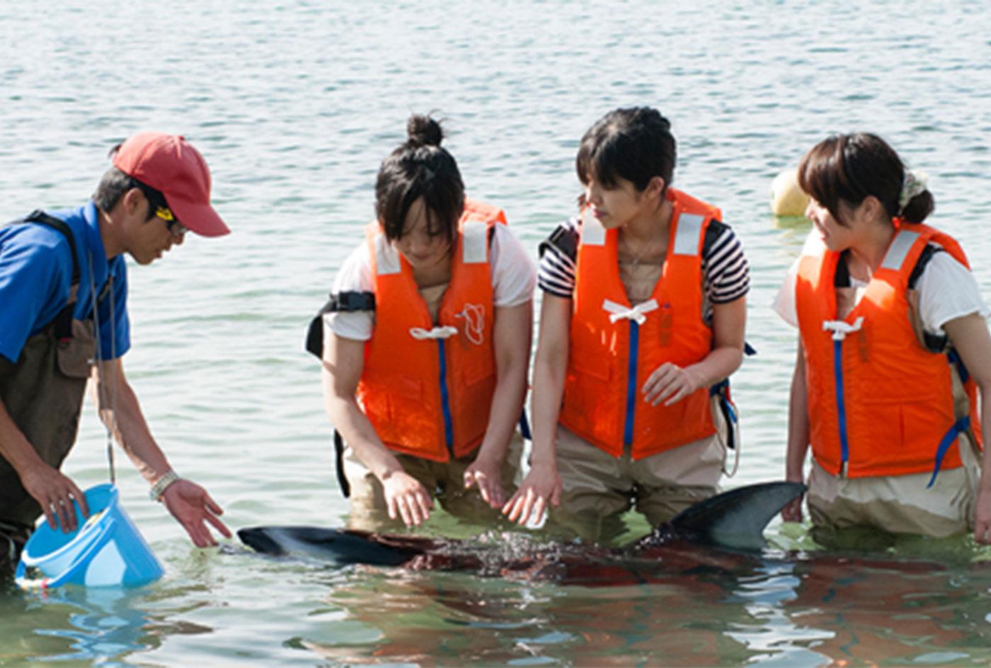 イルカとのふれあいビーチ | 石川県