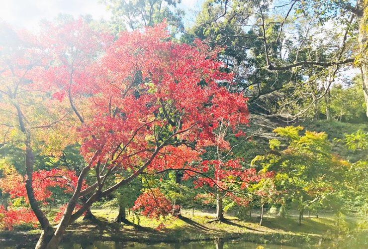 紅葉ノルディックウォークin泉自然公園 | 千葉県