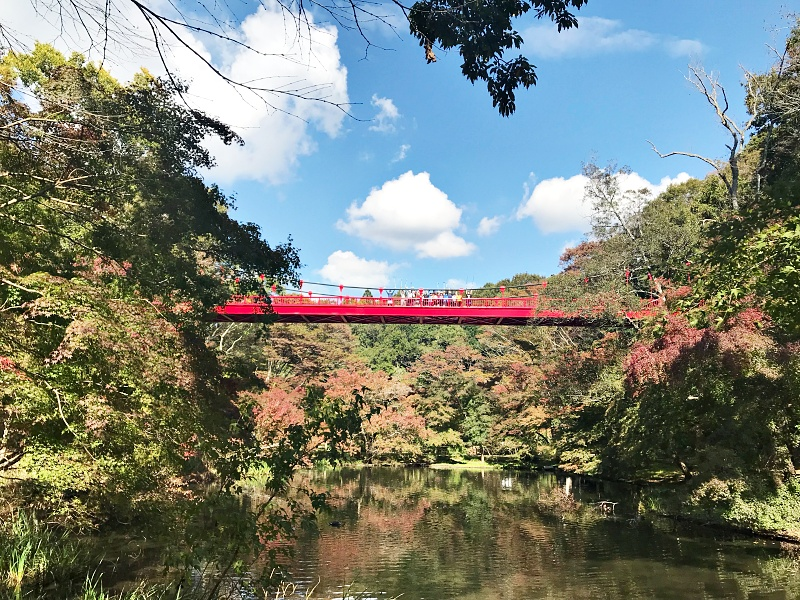 紅葉ノルディックウォークin泉自然公園   千葉県
