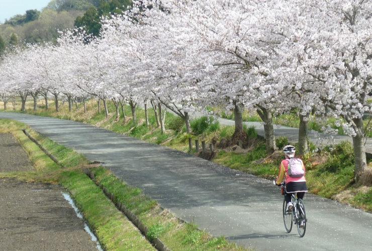 掛川ガイドサイクリングツアー   静岡県
