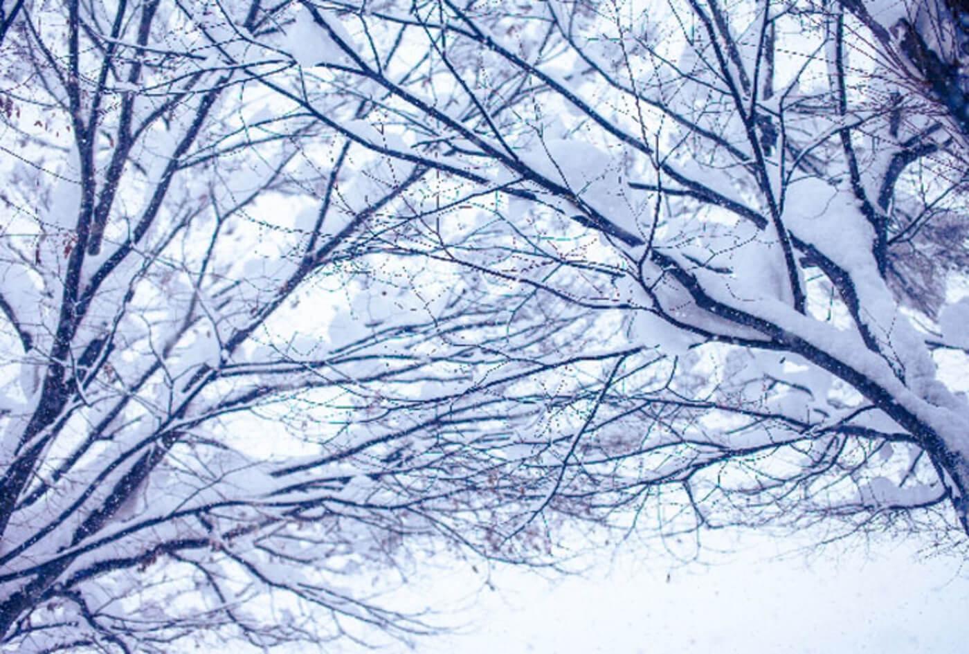 スポーツ雪合戦東日本大会 | 福島県