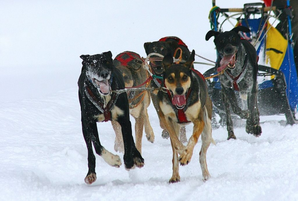 全国犬ぞり稚内大会 | 北海道
