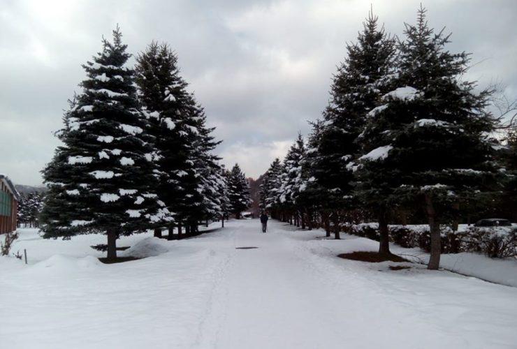 真駒内公園雪上マラソン | 北海道(真駒内公園)