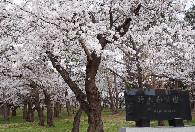 あおもり桜マラソン | 青森県