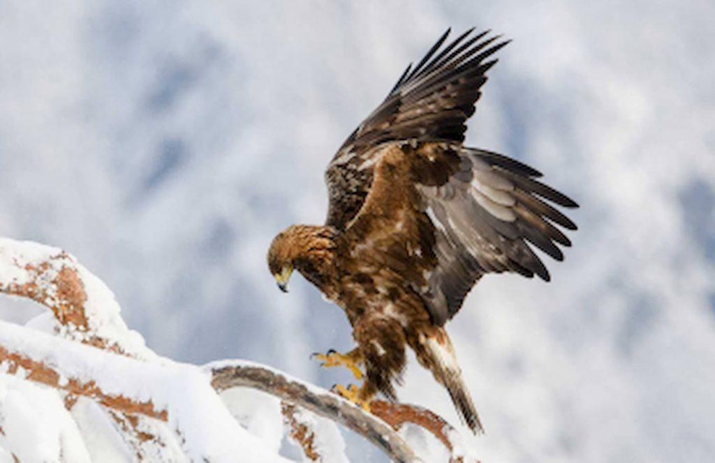 スノーシューで探検! ささき隊長と雪の自然探検隊ツアー | 群馬(猿ヶ京温泉)
